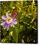 Fritillary On A Passion Flower  Acrylic Print