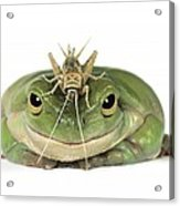Frog And Grasshopper Acrylic Print