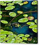 Frog And Lily Pads Acrylic Print