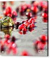 Frog At A Cape Cod Cranberry Bog Acrylic Print