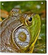 Frog Eye Acrylic Print