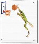 Frog Playing Basketball Acrylic Print