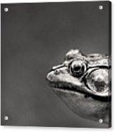 Frog Portrait Acrylic Print by Cappi Thompson