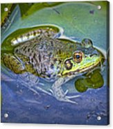 Frog Resting On A Lily Pad Acrylic Print