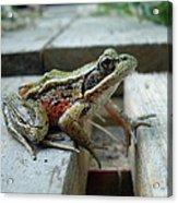 Frog Acrylic Print by Sophia Petersen