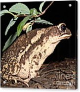 Froggy's Good Side Acrylic Print