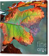 From Greeen To Rust Acrylic Print