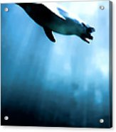 From The Depths Acrylic Print by Sharon Lisa Clarke