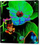 From The Psychedelic Garden Acrylic Print