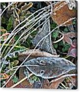 Frost Composition Acrylic Print