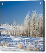 Frost-covered Trees In Snowy Field Acrylic Print