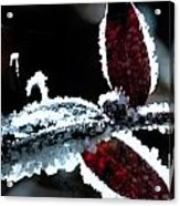 Frost On Leaf Acrylic Print