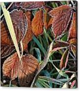 Frost On Leaves No. 2 Acrylic Print