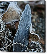 Frosted Feather Acrylic Print