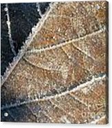 Frosted Leaf Acrylic Print