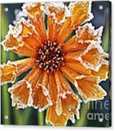 Frosty Flower Acrylic Print by Elena Elisseeva