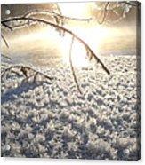 Frosty Ice At Sunrise Acrylic Print
