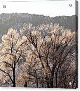 Frosty Tree Acrylic Print