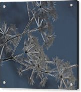 Frosty Weeds Acrylic Print