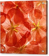 Frozen Flora 6 Acrylic Print