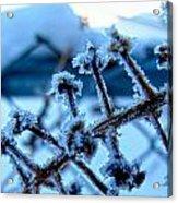 Frozen II Acrylic Print