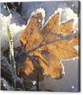 Frozen Oak Leaf Acrylic Print