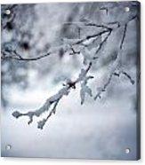Frozen Path Acrylic Print