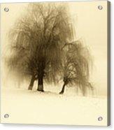 Frozen Trees Acrylic Print