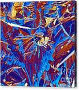 Fructose Acrylic Print
