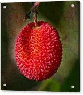 Fruit Of Strawberry Tree Acrylic Print