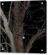 Full Moon Beyond The Old Tree Acrylic Print