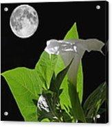 Full Moon Flower Acrylic Print