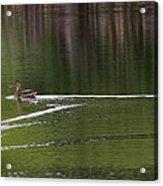 Full Speed Ahead Acrylic Print