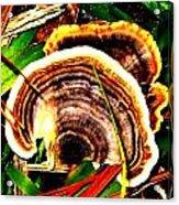 Fungi Acrylic Print