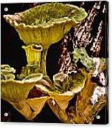 Fungus Among Us Acrylic Print by Michael Putnam