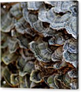 Fungus Acrylic Print