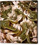 Fungus Swirl Acrylic Print by Michael Putnam
