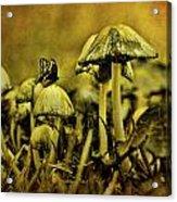 Fungus World Acrylic Print by Chris Lord