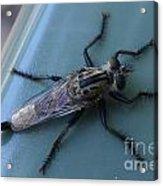 Funky Bug Acrylic Print