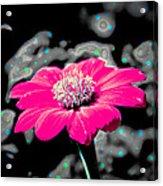 Funky Flower Acrylic Print