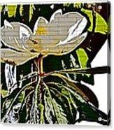 Funky Magnolia Acrylic Print