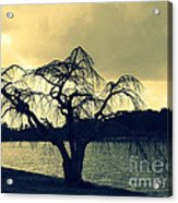 Furman Lake Tree Acrylic Print