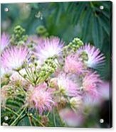 Furry Pink Bouquet Acrylic Print