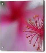 Fuzzy Hibiscus Acrylic Print
