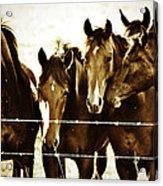 Galloping Brothers  Acrylic Print