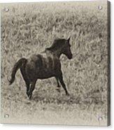 Galloping Horse Acrylic Print