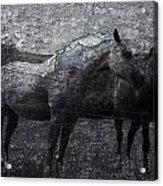 Galloping Stones Acrylic Print