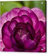 Garden Beauty Acrylic Print