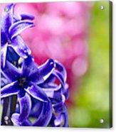 Garden Color Splash Acrylic Print