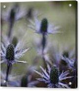 Garden Facets Acrylic Print